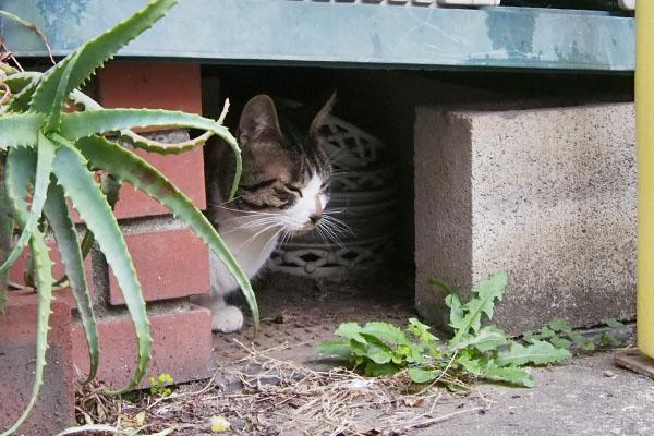 ホット 隠れる