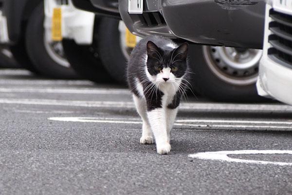 chomo staring and walking