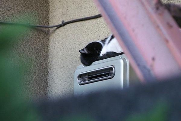 ニコル 給湯器の上お昼寝