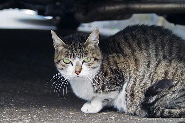 sakura under the cat