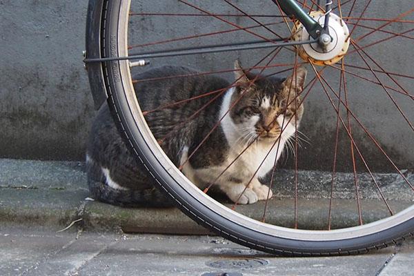 オンブレ 自転車を盾に