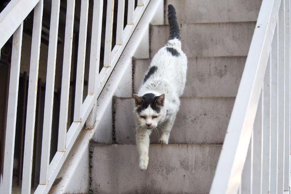 テン 階段トテトテ
