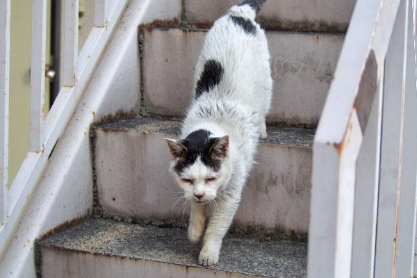テン 階段トテトテ2