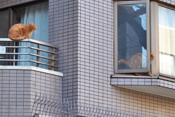 窓辺のコが引っ込む