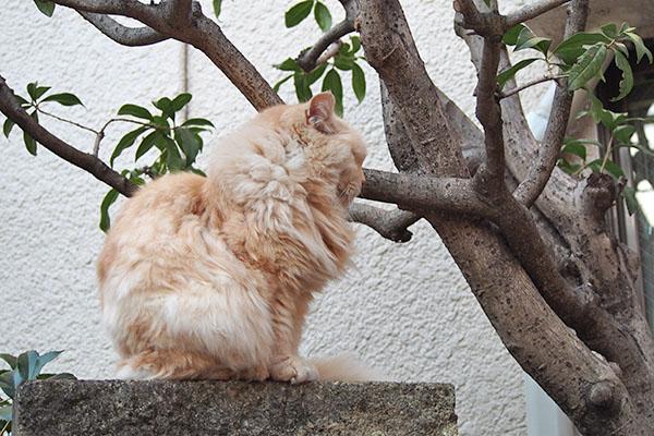 ナリコマ 狛猫ポジション