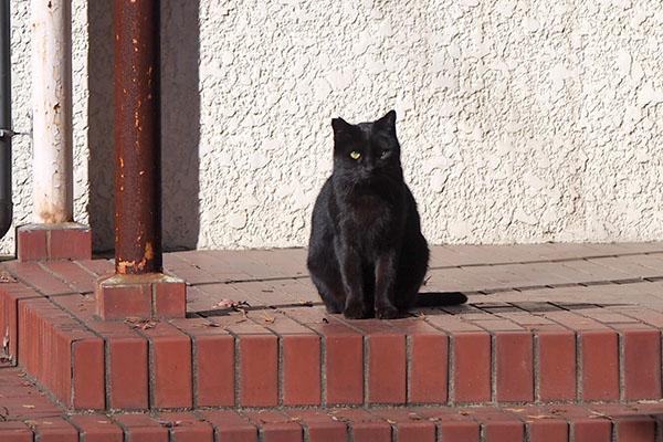 キト 玄関にお座り