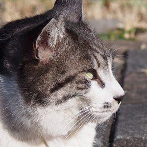 tanntaru profile left closeup