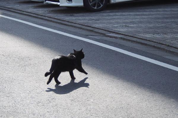 モノ太 道路を渡る