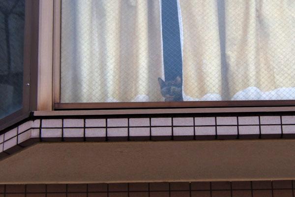 窓辺にサビ猫さん