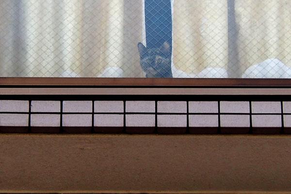 窓辺にサビ猫さん2