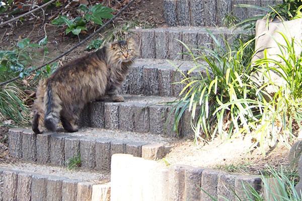 メレンゲ 食べた後階段上がる