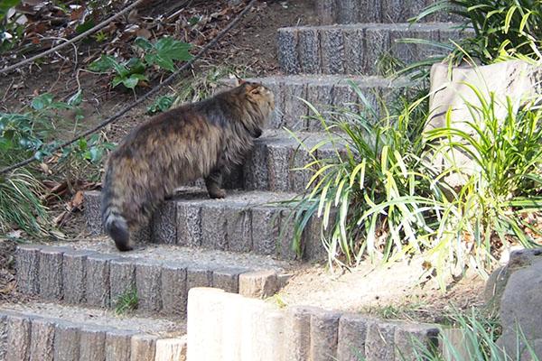 メレンゲ 食べた後階段上がる2