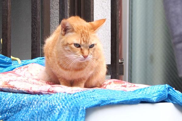 仔猫を見てる ソラちゃん