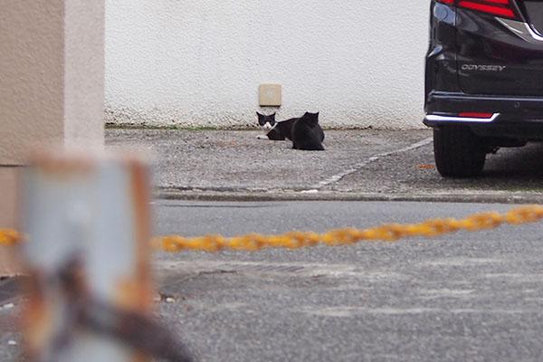 遠くからチョモと黒い仔猫