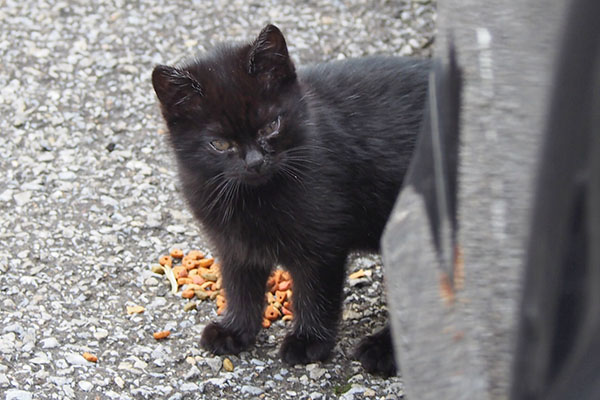 black kitten chomobaby