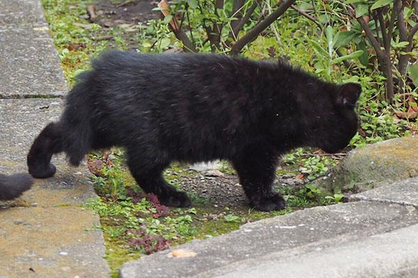 黒仔猫 しっぽ短い