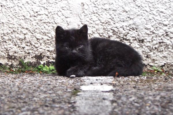 ちんまり 仔猫最初の一枚