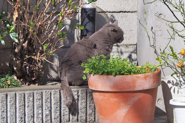 roshigure sunbathing