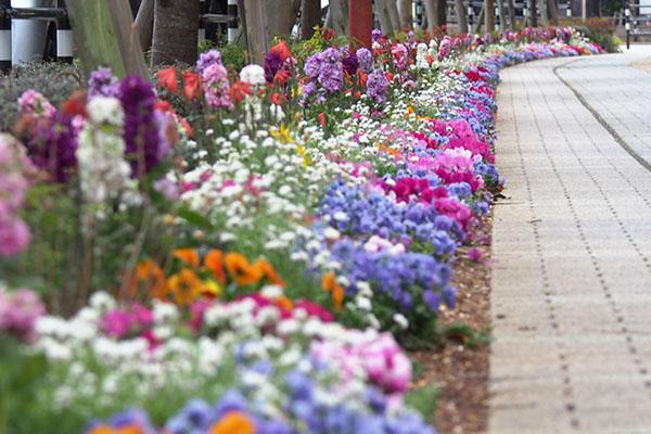 side walk flowers3