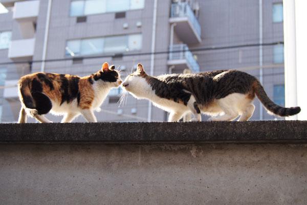 れもんとコルビ 塀の上で挨拶