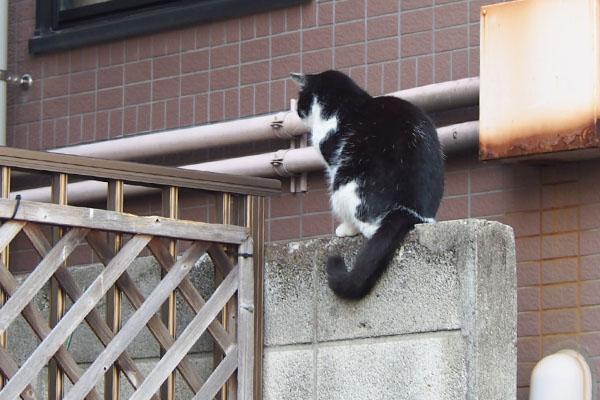 スズ 塀の上でまっすぐ前