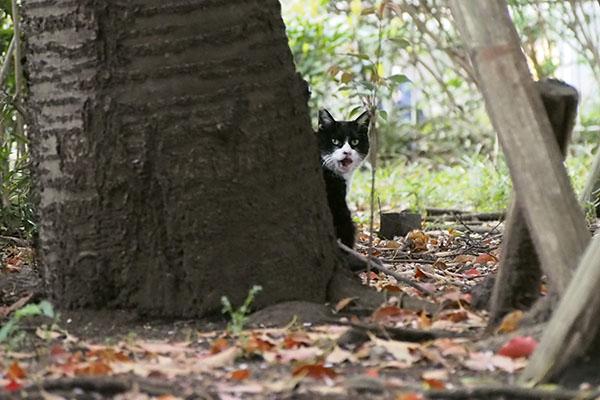 木の脇 振り向いて鳴くポチ