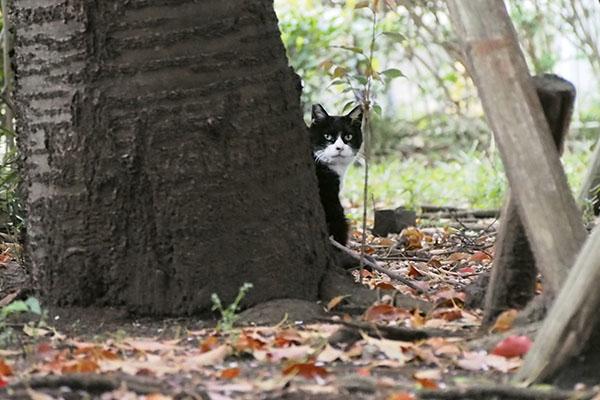 木の脇 見てる