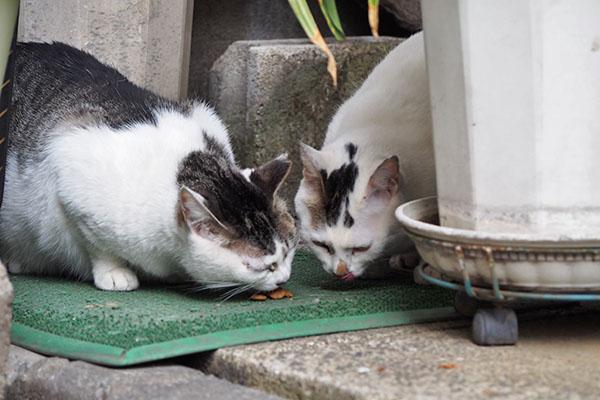 仲良くオヤツカリカリを食べるケイとオーロラ