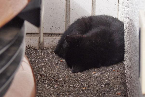 黒仔猫 丸くなって寝ている