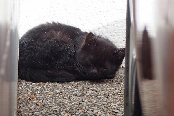 黒仔猫 すやすや