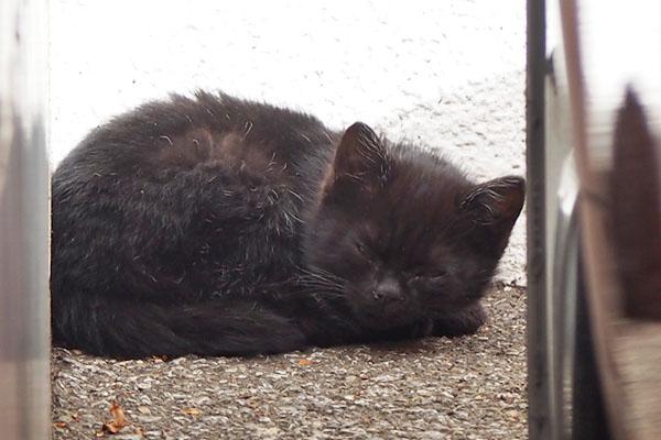 黒仔猫 目を開けた