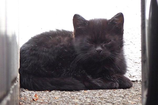 黒仔猫 にゃんだー