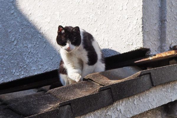 nicole on the roof