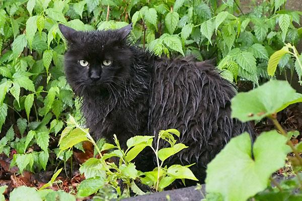 Mofune wet much in the rain