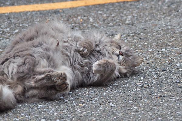 mafu rolling cat