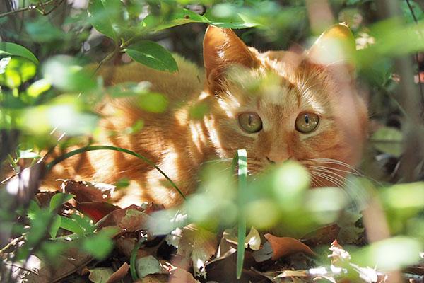 ginger in the bush
