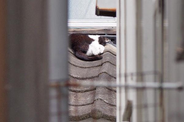 ニコル 建物の間から 寝てる