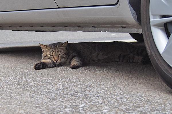 しわを 車の下に伸びてる