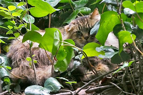merenge under the leaves