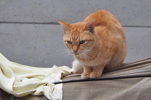 ソラちゃん 外猫さんチェック