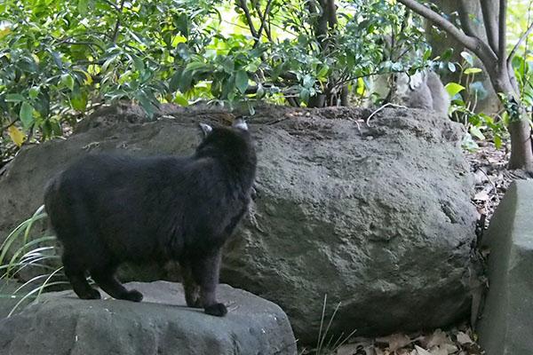 クーロン 石の上 オットを見てる