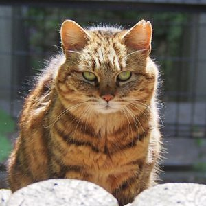 kuratan sitting and staring