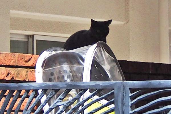黒猫フレーム