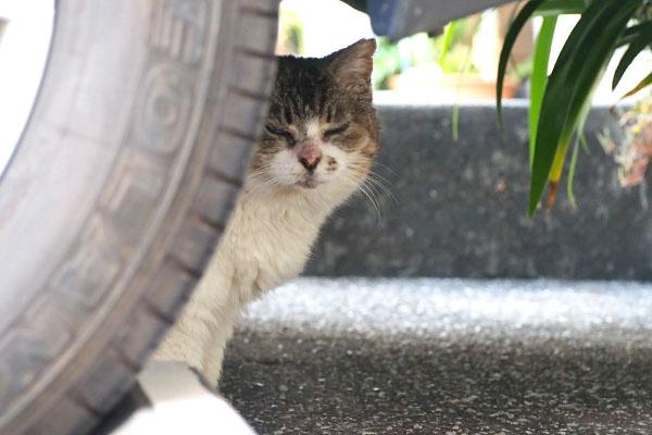 もも タイヤの脇からこっちょり見てる