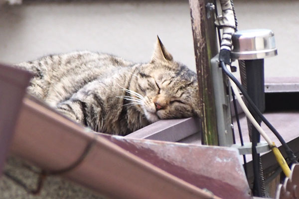 シマヲ のに寝た