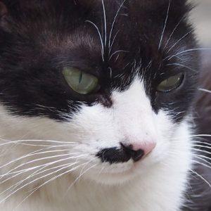 komachi face closeup