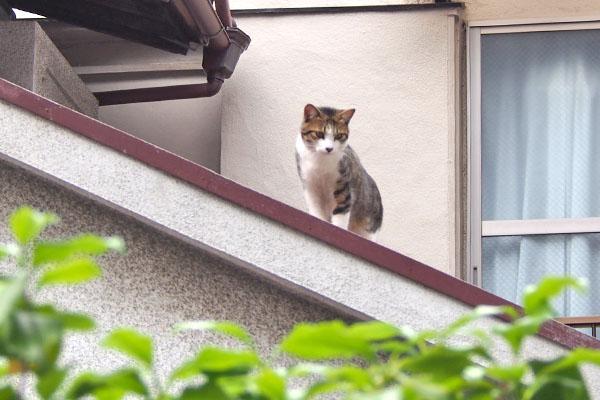 コルビ 屋根の上にみっけ