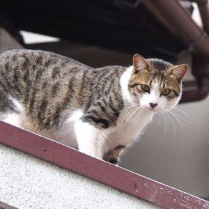corbi on the roof