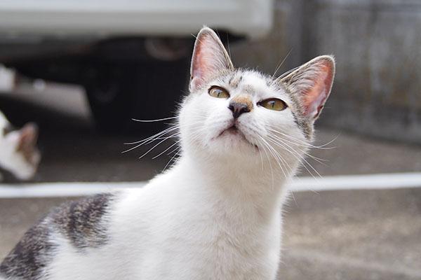 shiromaru cute face