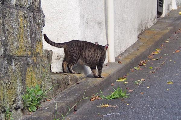 猫好きさんちからキジトラさん